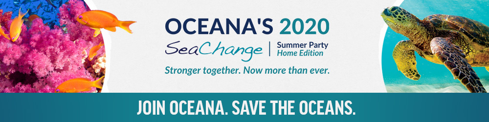 Seachange Summer Party 2020